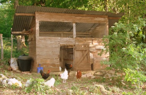 hens at our dordogne holiday cottages