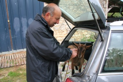 dordogne holiday cottages in the dordogne with farm animals