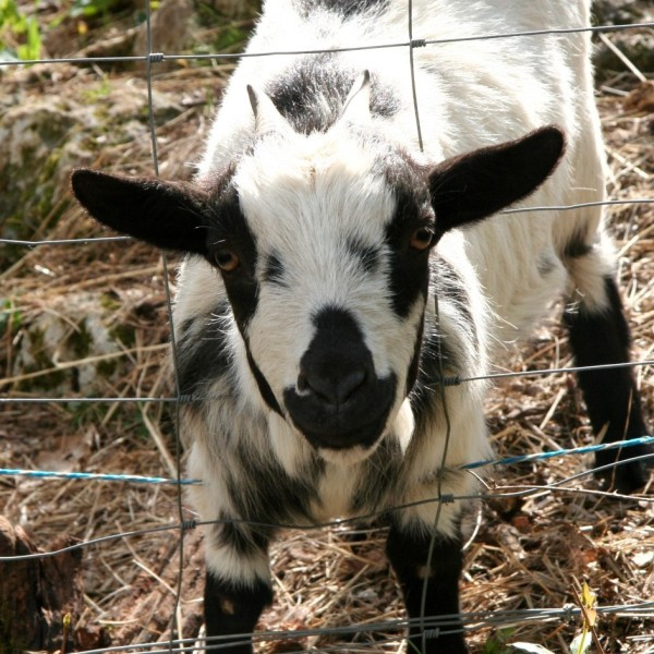 dordogne holiday cottages with farm animals