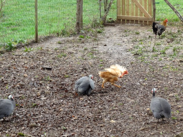 Establishing the pecking order